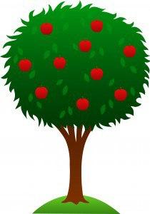 apple-20tree-20clipart-apple_tree